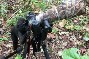 Mogens fotograferer vilde aber: De kommer tæt på for at spejle sig 1
