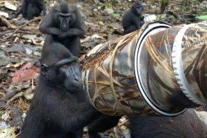 Mogens fotograferer vilde aber: De kommer tæt på for at spejle sig 2