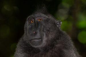 Mogens fotograferer vilde aber: De kommer tæt på for at spejle sig 4