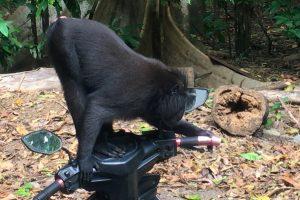 Mogens fotograferer vilde aber: De kommer tæt på for at spejle sig 5